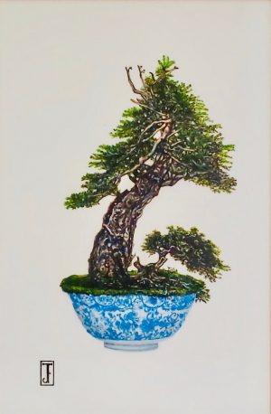 Herman Douglas Fir Bonsai Byard Art